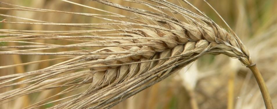 Best Grains