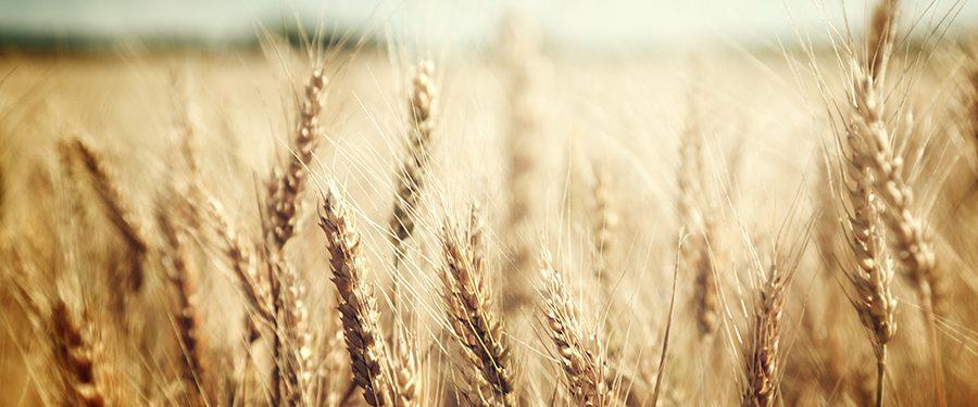 Gluten-Free Whole Grains